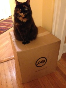 Our cat Posy, sitting on the box.
